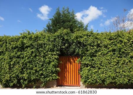 Yellow wooden gate, illuminated by the sun, in the high hedges