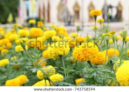 Yellow yellow yellow flower #743758594