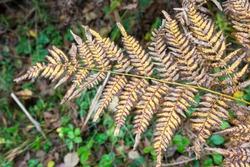 Yellowed fern leaf on a blurred background. Dry fern leaf in the forest. Autumn tropical background.