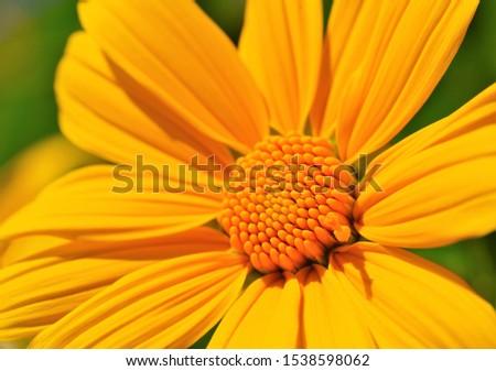 Yellowish flower blooming in sunlight in macro mode.Macro world.