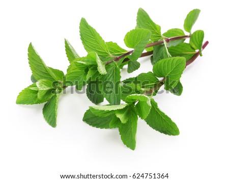 yerba buena, hierba buena, mojito mint, cuban mint #624751364