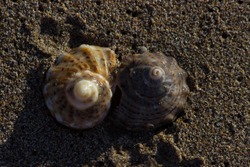 Yin and yang - Close up of a couple of whelk (sea snail, marine gastropod mollus) shells on a sandy beach, Shabla, Bulgaria