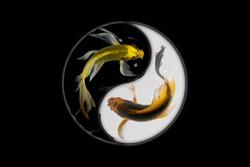 Yin yang koi fish black and white background
