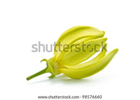 Ylang-Ylang Flower on white background