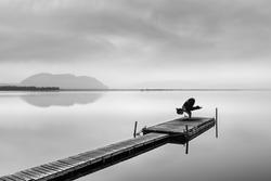 Yoga Bakasana or Crow Pose