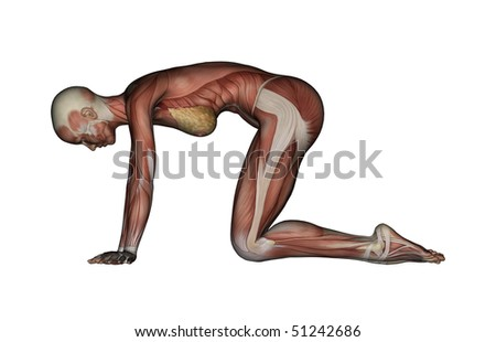 yoga  cat pose female muscles  side view stock photo