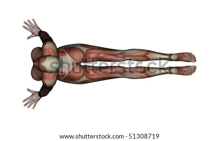 yoga  cobra pose female muscles  top view stock photo