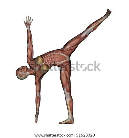 Half Moon Yoga Pose Muscles
