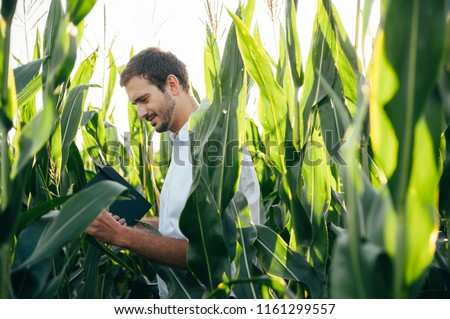 Yong handsome agronomist holds tablet touch pad computer in the corn field and examining crops before harvesting. Agribusiness concept. agricultural engineer standing in a corn field with a tablet. #1161299557