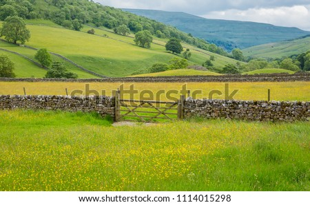Yorkshire Dales wildflower meadows with drystone walling, rolling hills and farm gate.  Yorkshire, UK, England. Landscape.