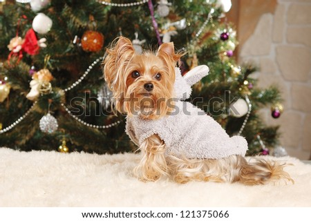 Yorkshire terrier puppy with Christmas tree