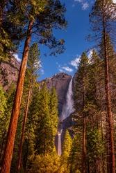 Yosemite Falls framed by towering sequoias
