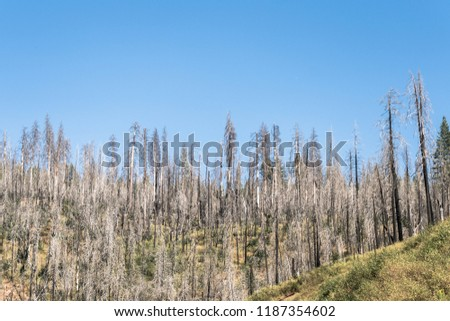 yosemite park scenes after burning