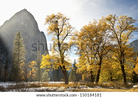 Yosemite Sunlit Meadow in Autumn