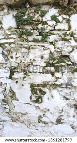 Yosunlu Bitkili Duvar Stok fotoğraf ©