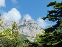 You can see the mountain tops through the pines. Large coniferous trees prevail-cypress, Italian and Crimean pine, Lebanese and Atlas cedar, Spanish fir, Montezuma pine, high juniper.