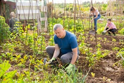 Young adult man farmer working with hoe in vegetable garden, hoeing soil