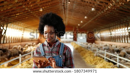 Young African American pretty woman using tablet device and walking in farm stable. Female farmer tapping and scrolling on gadget computer in shed. Going inside shed with livestock.