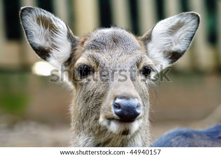 young and innocent deer