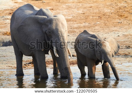 Young and old elephants on the banks of the Chobe River in Botswana