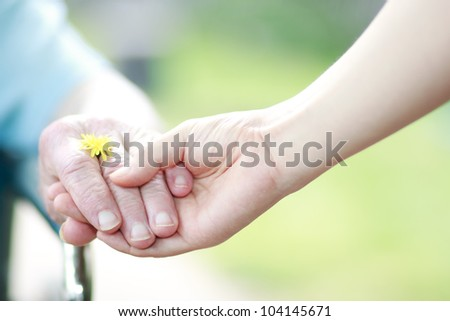 Young and seniors hands holding their hands with a yellow dandelion