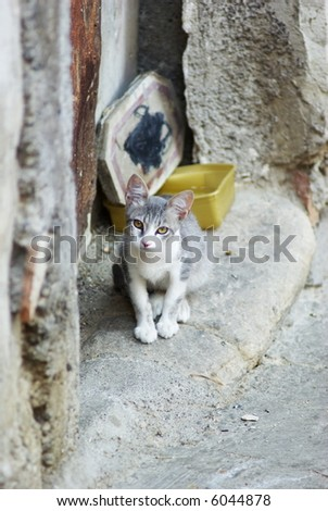 Young animal of stray cat in a street