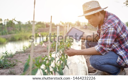 Young Asian farmer using tablet and checking his plant or vegetable (Chilli tree). Technology for Smart farmer concept Foto d'archivio ©