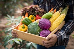 Young Asian man farmer with freshly picked vegetables in basket. Hand holding wooden box with vegetables in field. Fresh Organic Vegetables from local producers ready for transport.