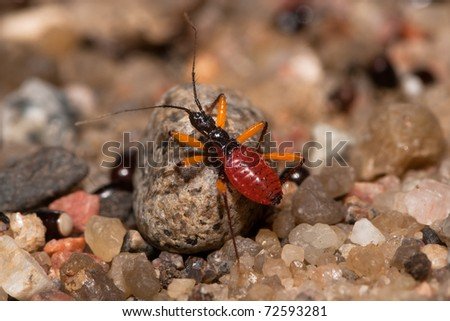 Young assassin bug on the gravel