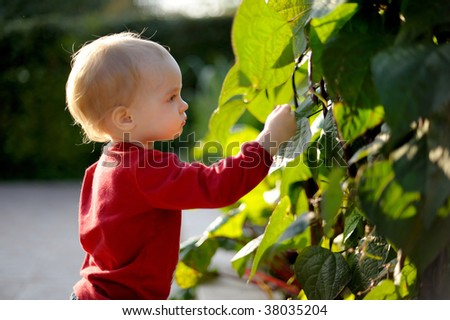 Young baby touching leaves in a park