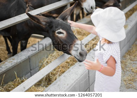 Young beautiful donkeys are standing in the stall behind the fence outside. Little girl stroking baby colt of a donkey on the head