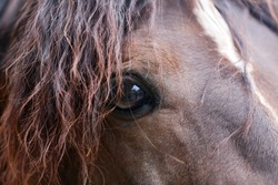 Young beautiful horse posing for camera. Portrait of a purebred young horse in summer corral. Closeup of a young domestic horse on natural background outdoors rural scene