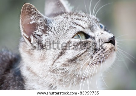 young beautiful wild cat sitting