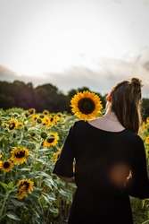 Young beautiful woman walks in a field of sunflowers at a very nice summerday in germa.