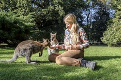 Young blonde woman is feeding Kangaroo in a park. Exchange student in Australia. People interacting with kangaroo at zoo. France.
