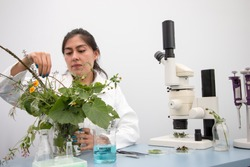 Young botanist at work, preparing fresh plant sample and examining specimen for further analysis