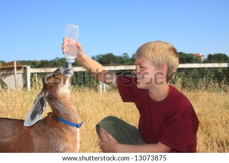 young boy feeding a baby nubian goat with a bottle.