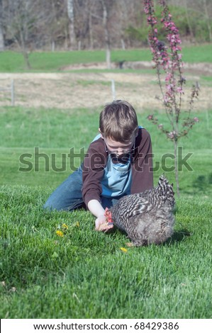 Young boy feeding a barred rock chicken in an open meadow - stock photo