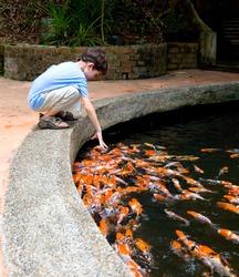 Young boy feeding koi carps in the pond.