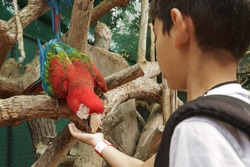 Young boy feeding parrot from the hand