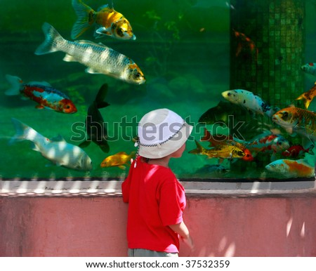 young boy looking at fishes in big aquarium