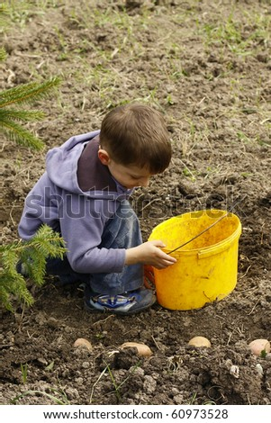 Young boy planting potatoes in the garden