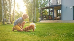 Young Boy Playing with Cute Little Pomeranian Dog In the Backyard. He Feeds Snacks and Pets His Best Friend Funny Fluffy Dog. Sunny Summer Day in Suburban House Courtyard