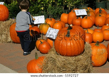 Young Boy Selects His Pumpkin at the Farmers Market