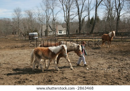 young boy walking horse with baby filly following