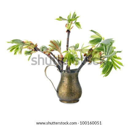 Young branch of horse chestnut tree in copper jug, isolated on white