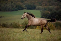 young brown horse running on meadow