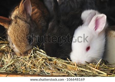 Young bunny or rabbit, baby animal