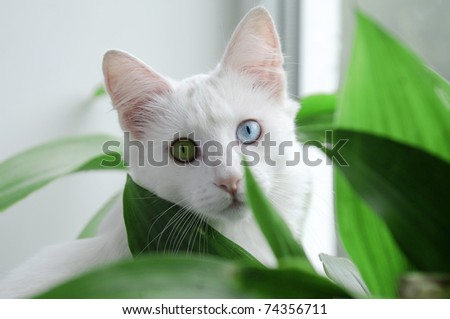 young cat between flowers