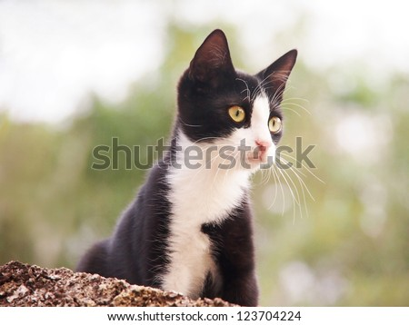 young cat, black and white,  26